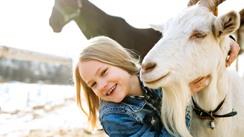 Little girl smiling while cuddling white goat